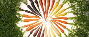 knollen en wortels